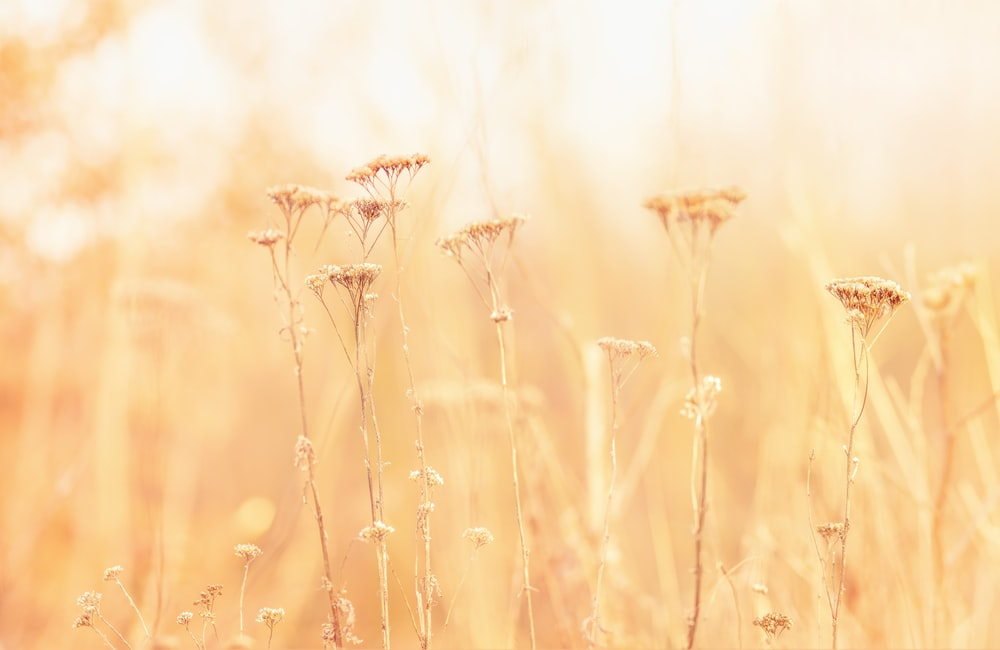 shallow focus photography of brown flower