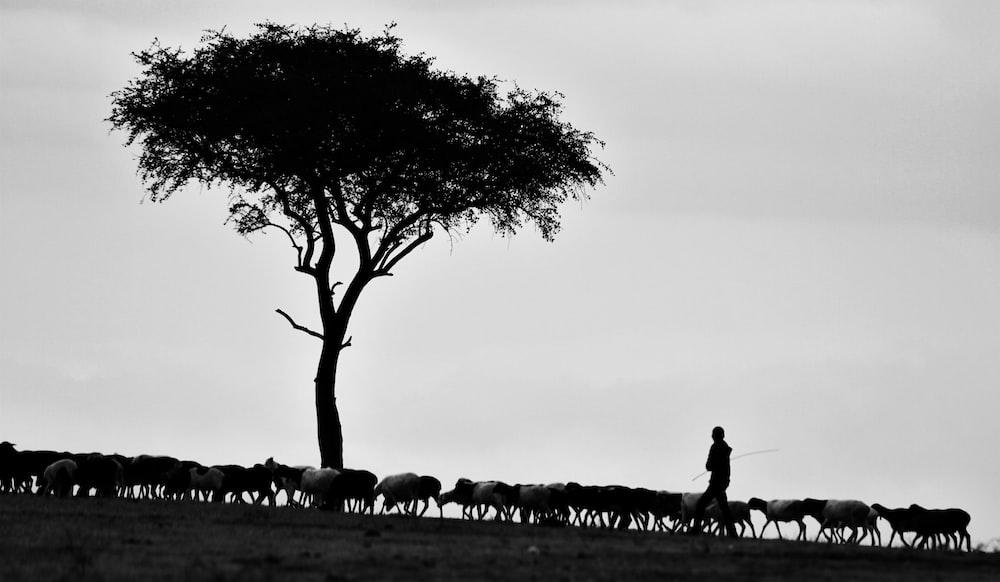 person walking beside tree