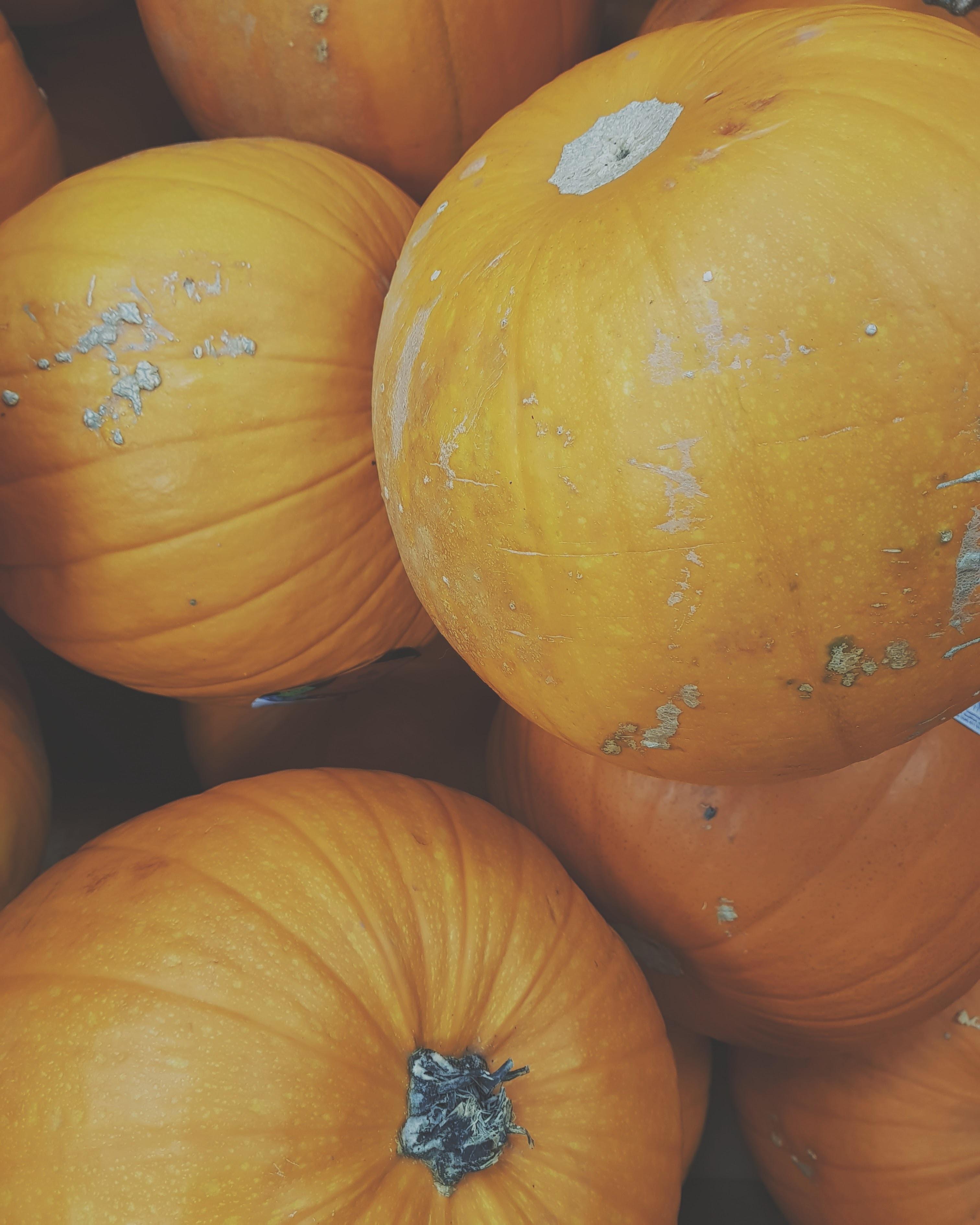 bunch of orange pumpkins