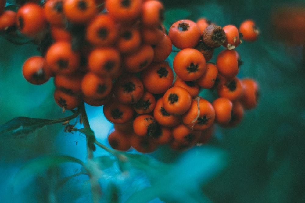 tilt-shift lens photography of red fruits