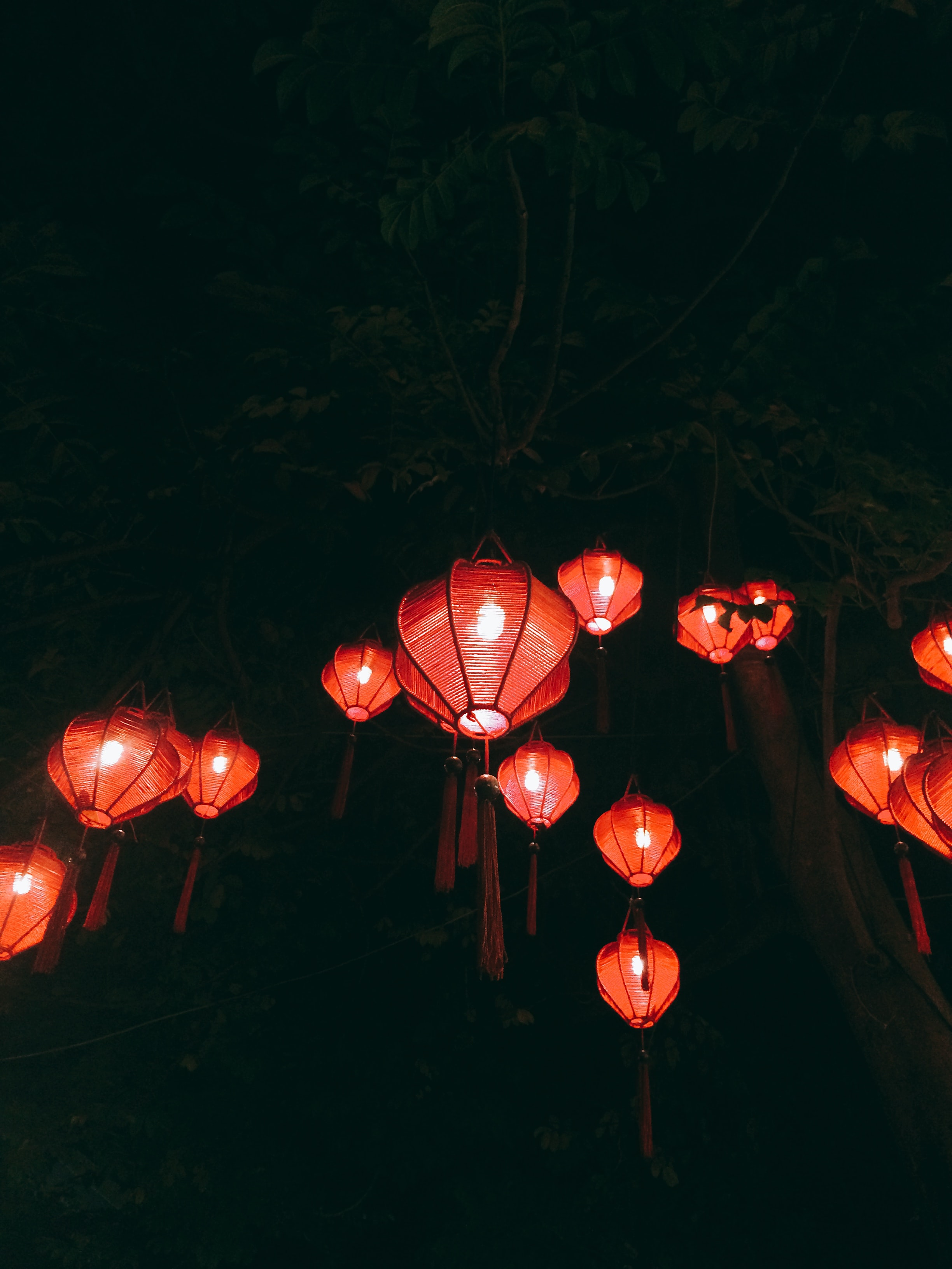 red paper lanterns on green trees