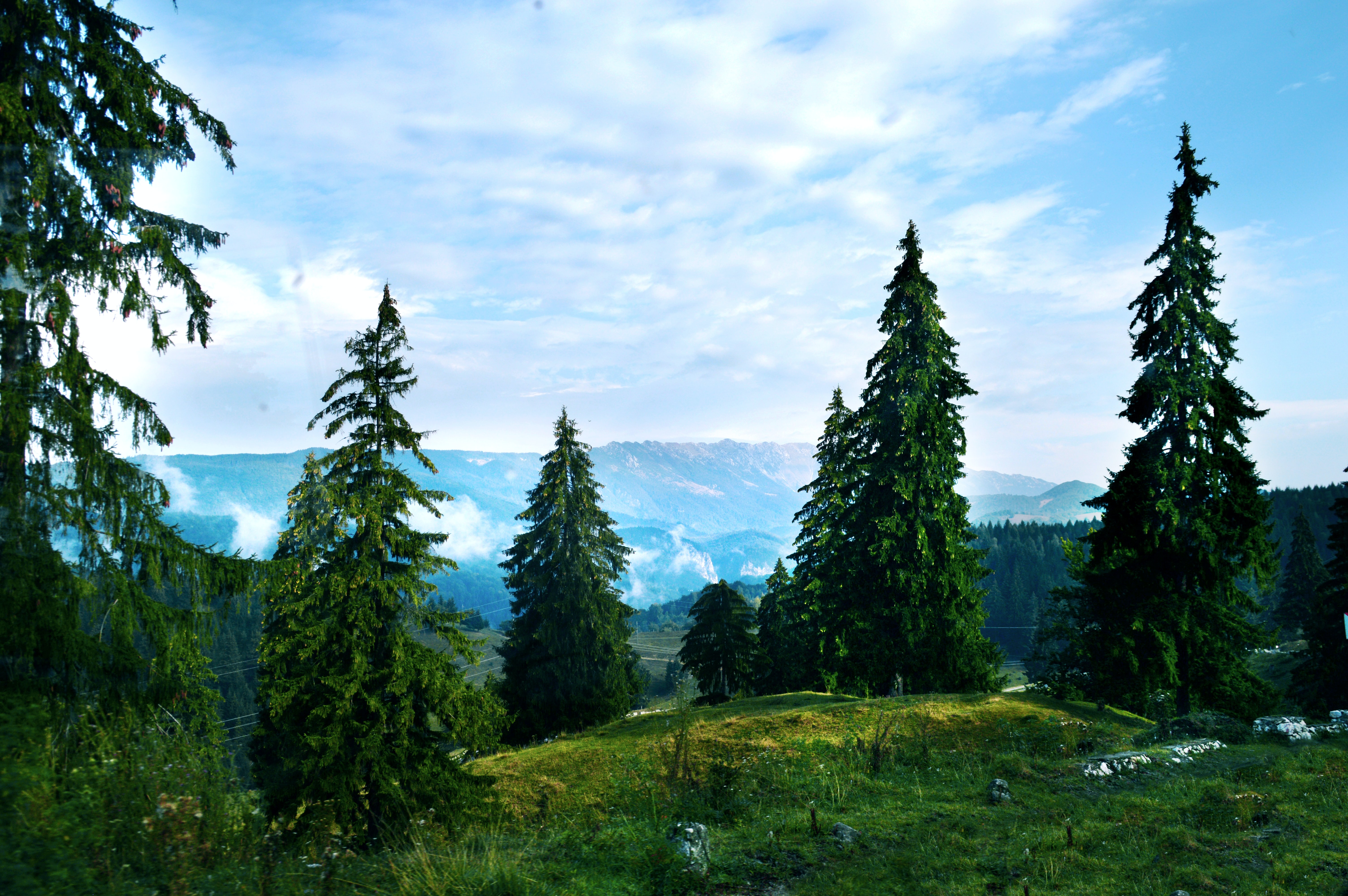 landscape photography of green trees