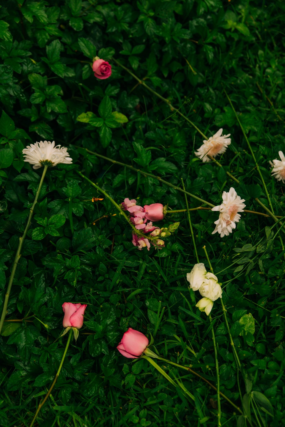 pink and white flowers beside plant