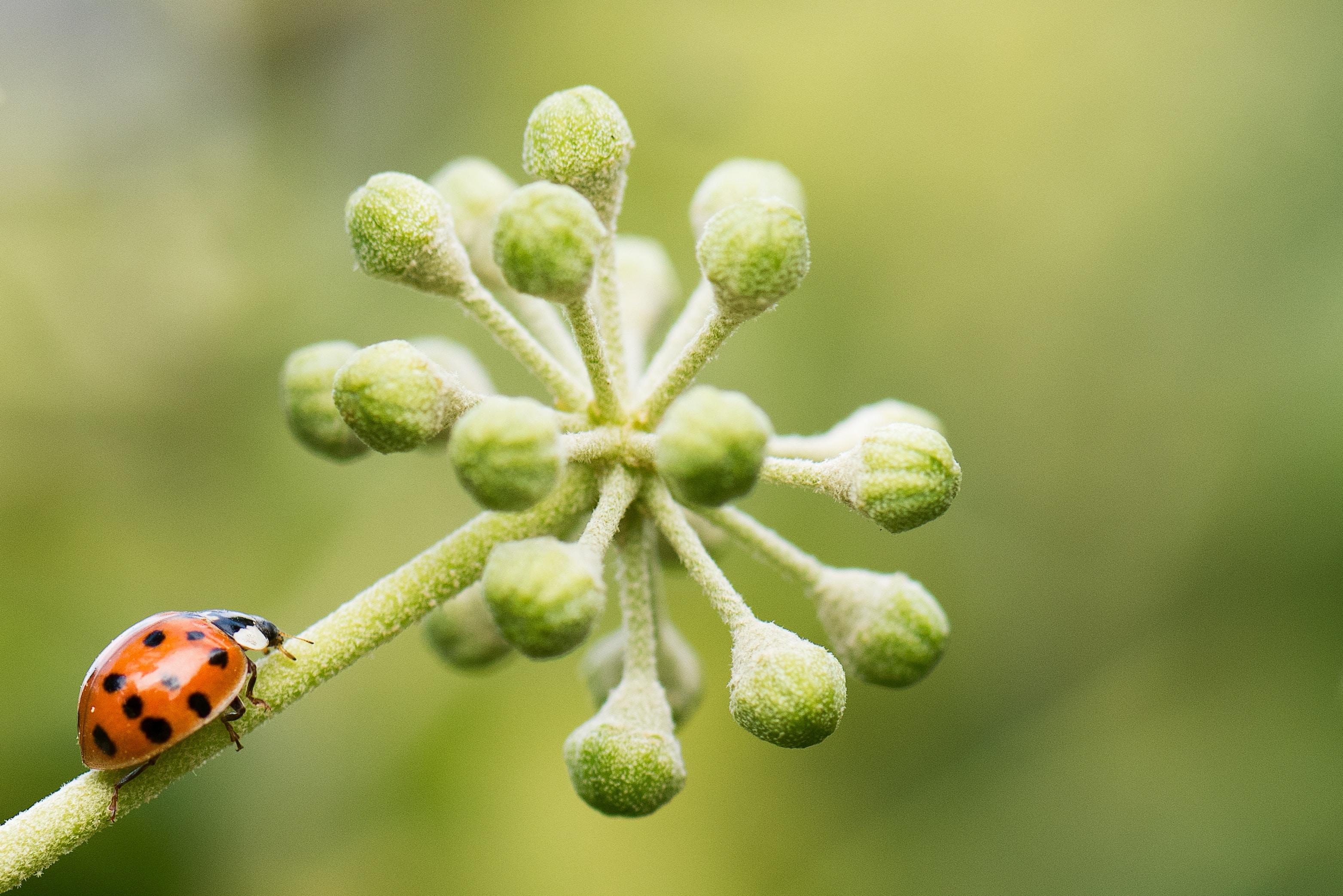 tilt-shift lens photography of bug on plant