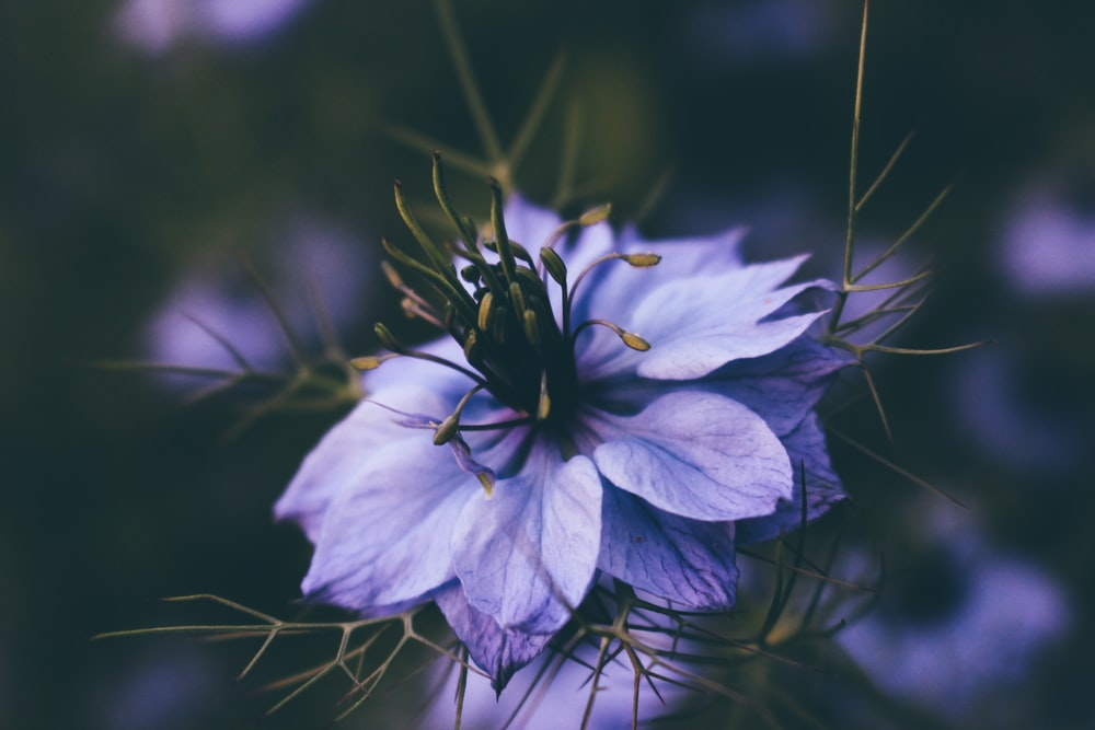 closeup photography of purple flower