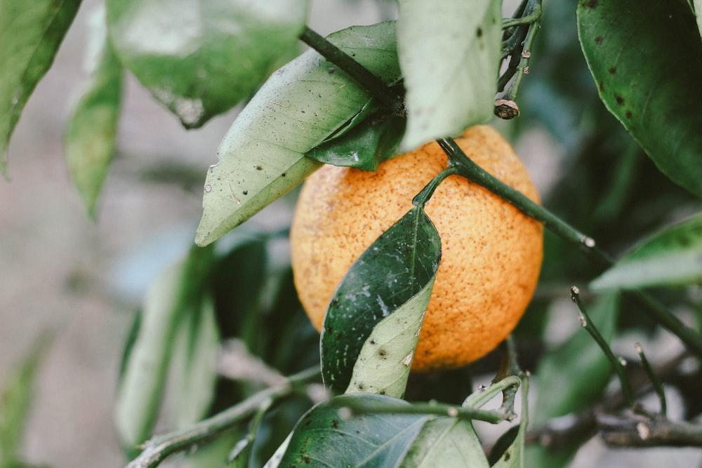 round orange fruit with leaves