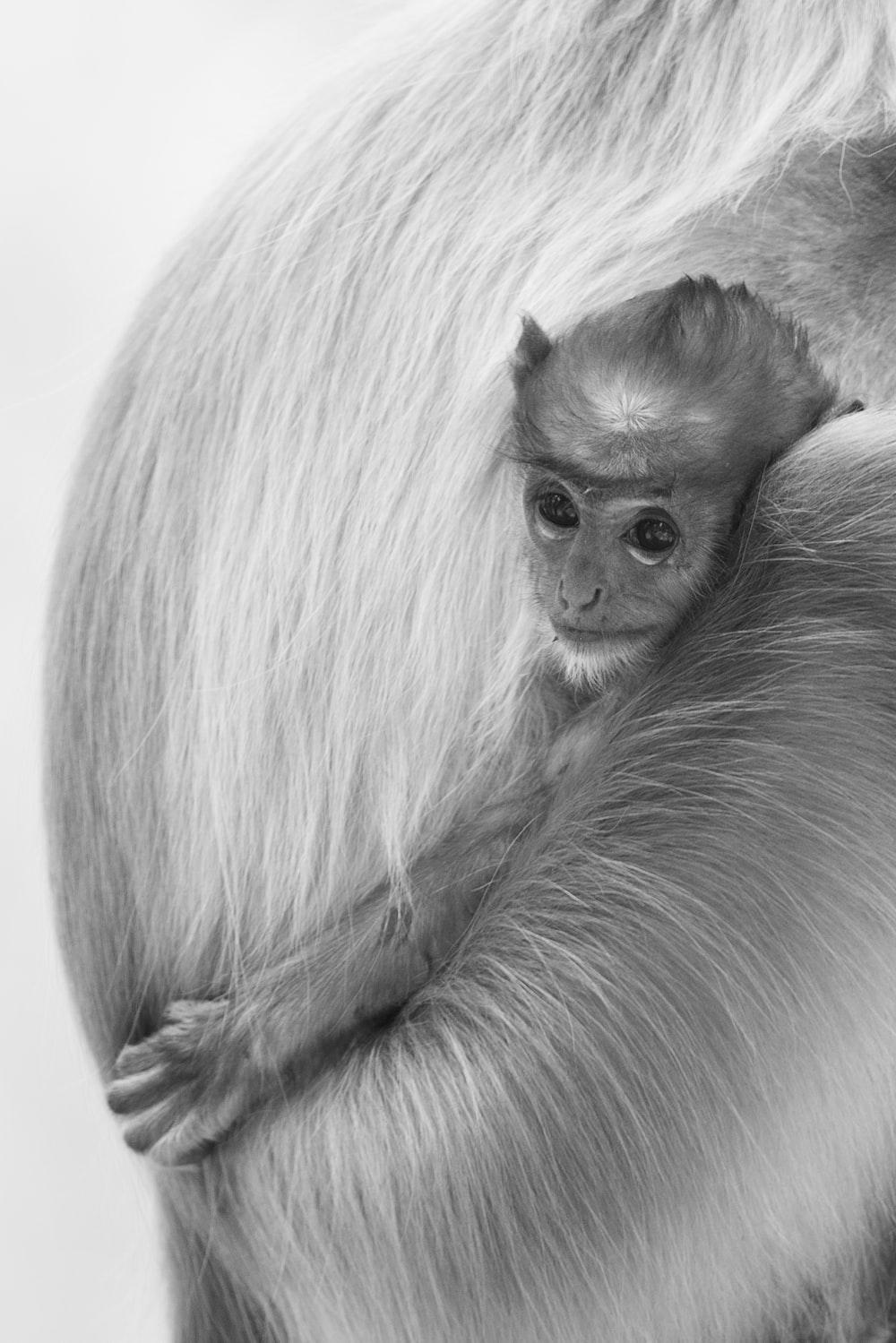 gray scale photo of monkey