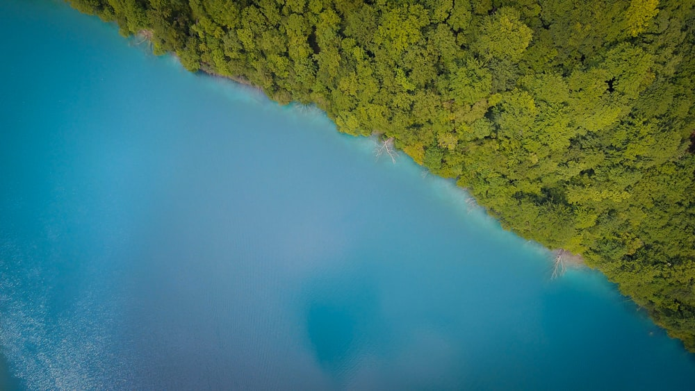 aerial photography of green trees near body of water