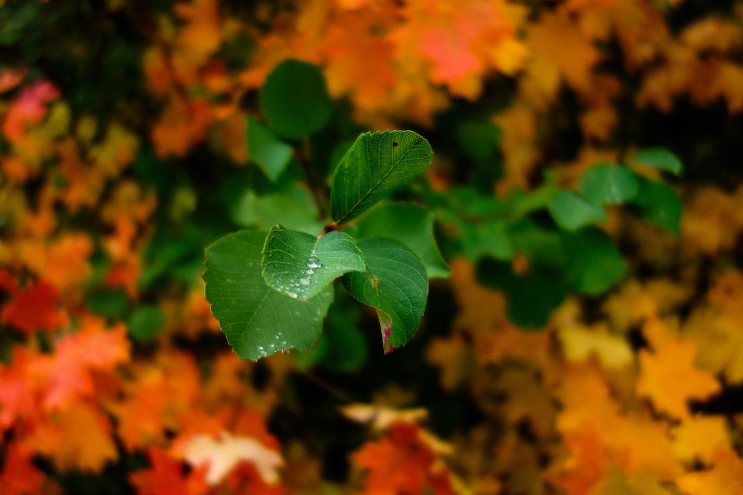 Patrick Hendry - Transition Autumn