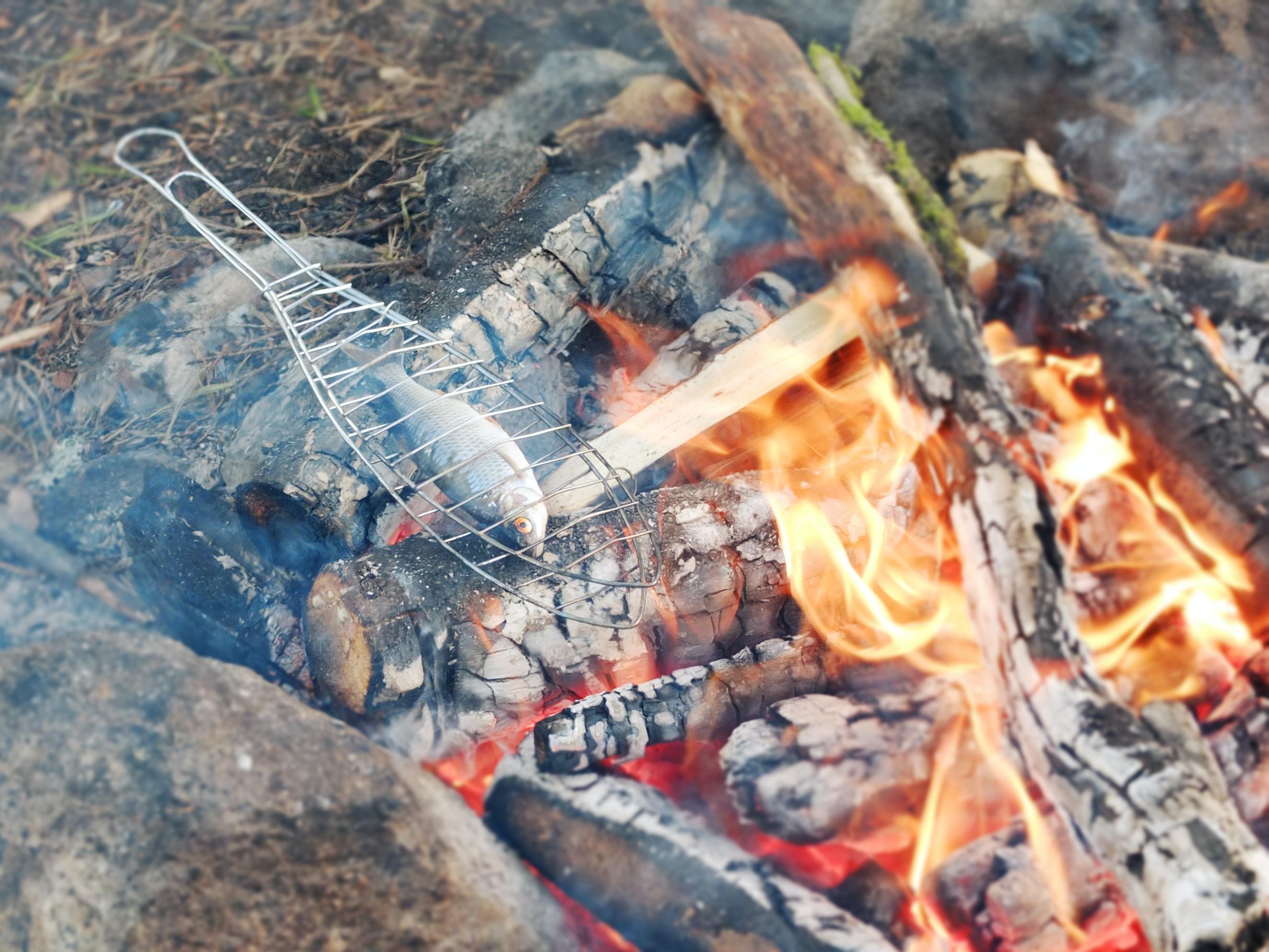 gray fish on burning woods at daytime