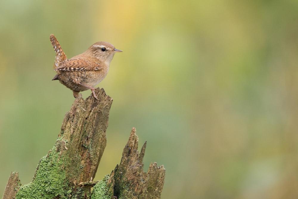 small brown bird on branch
