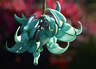green succulent plant in selective-focus photography