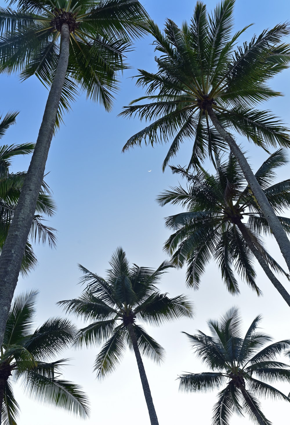 worm's eye view photography of coconut trees
