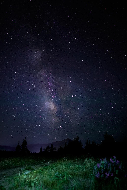 forest under starry skies