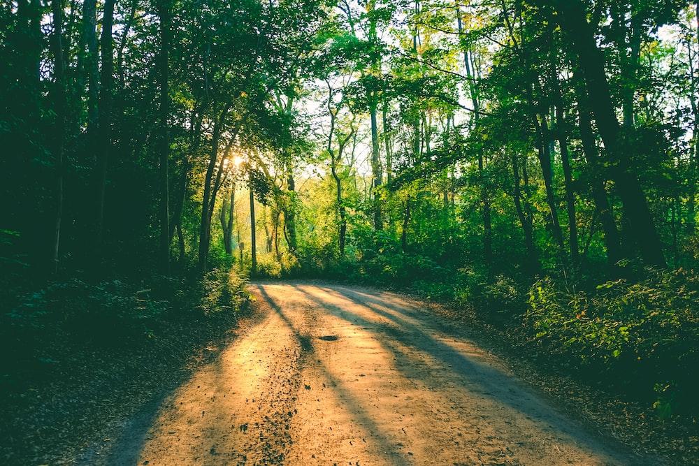 pathway between green trees