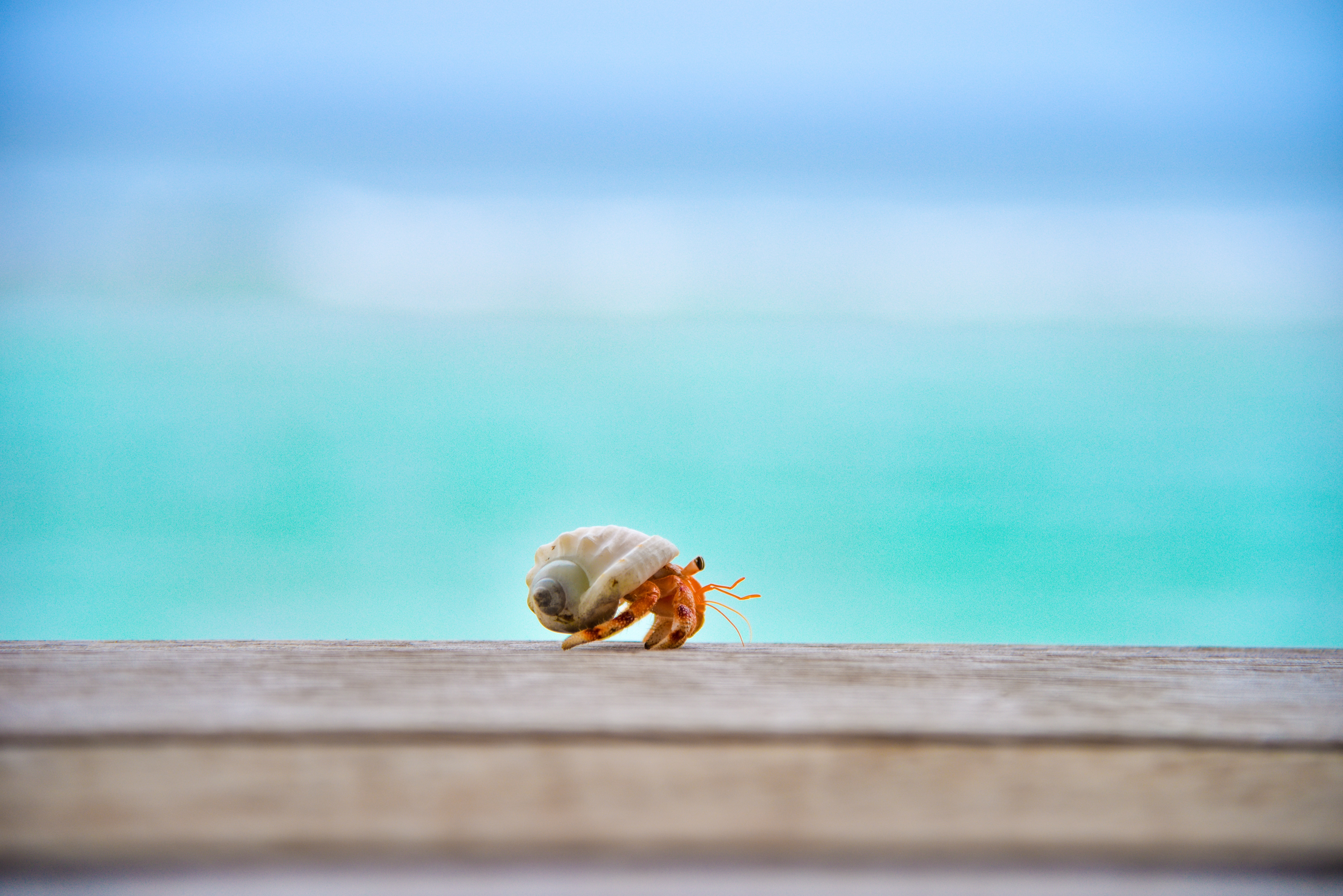 shallow focus photography of hermit crab on top of wood