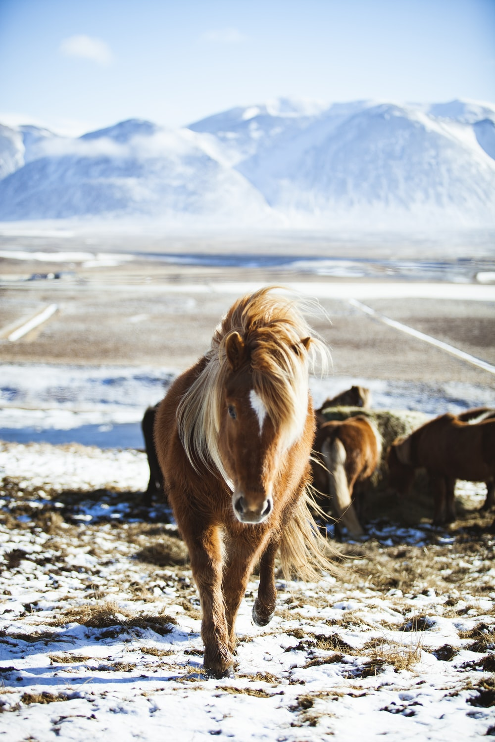 close-up photography of brown horse walking front of ice-capped mountain
