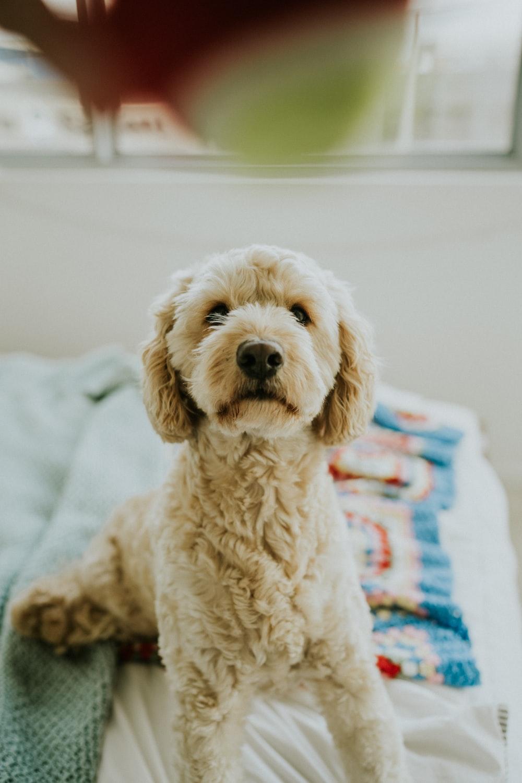 photo of medium-coated white dog