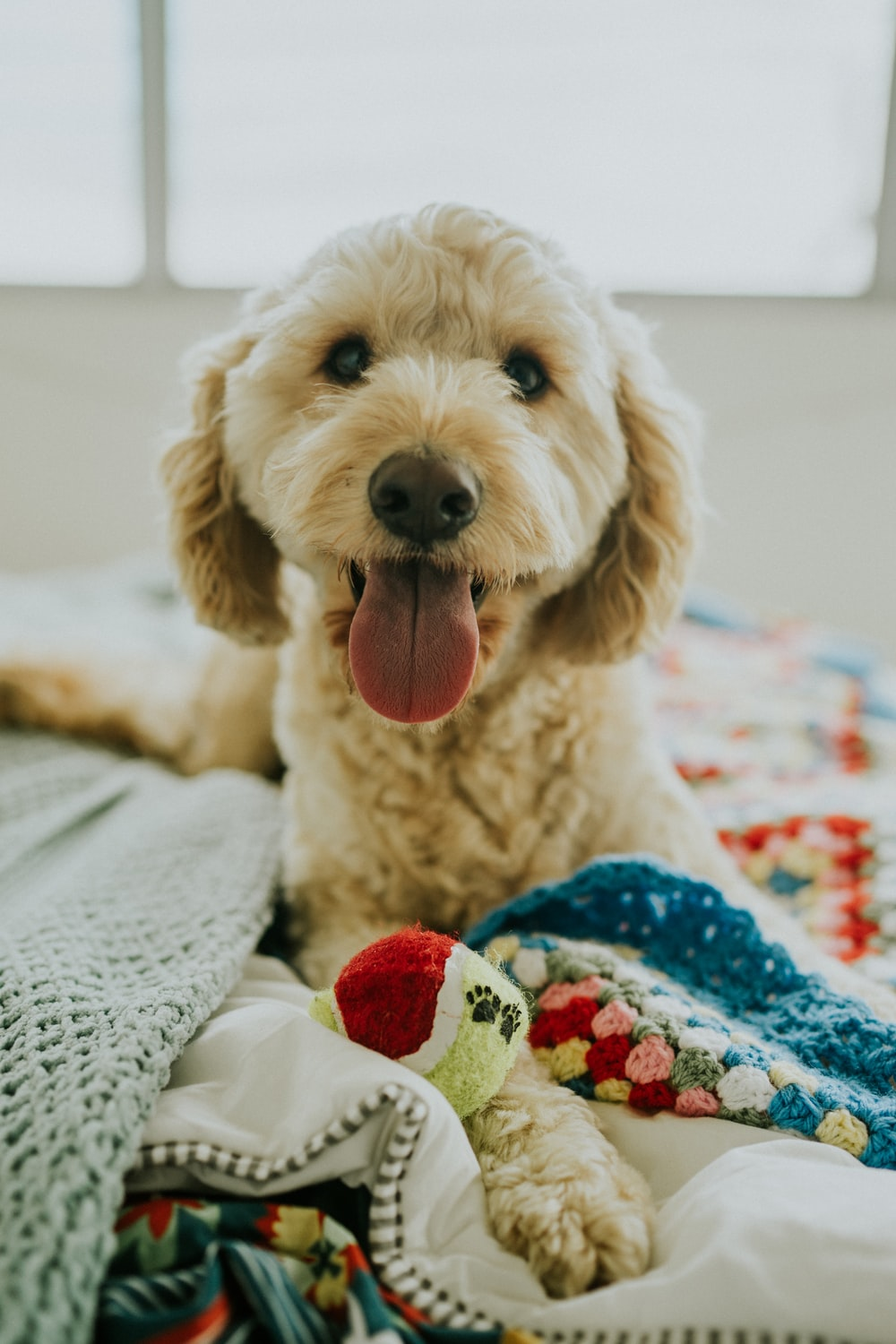 shallow focus photography of puppy lying on bed