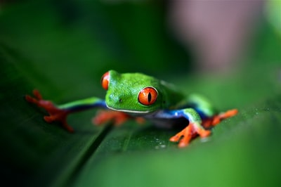 green frog on green leaf in selective focus photography