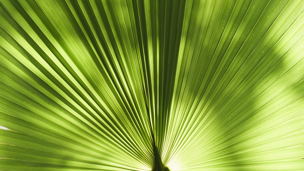 closeup photography of green leaf plant