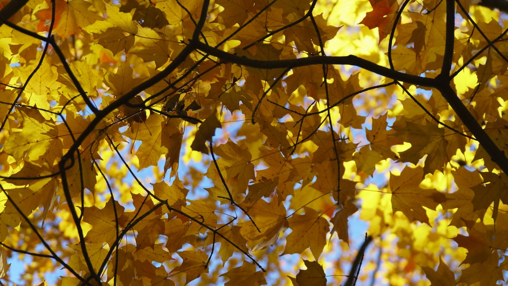 shallow focus of dry leafed tree