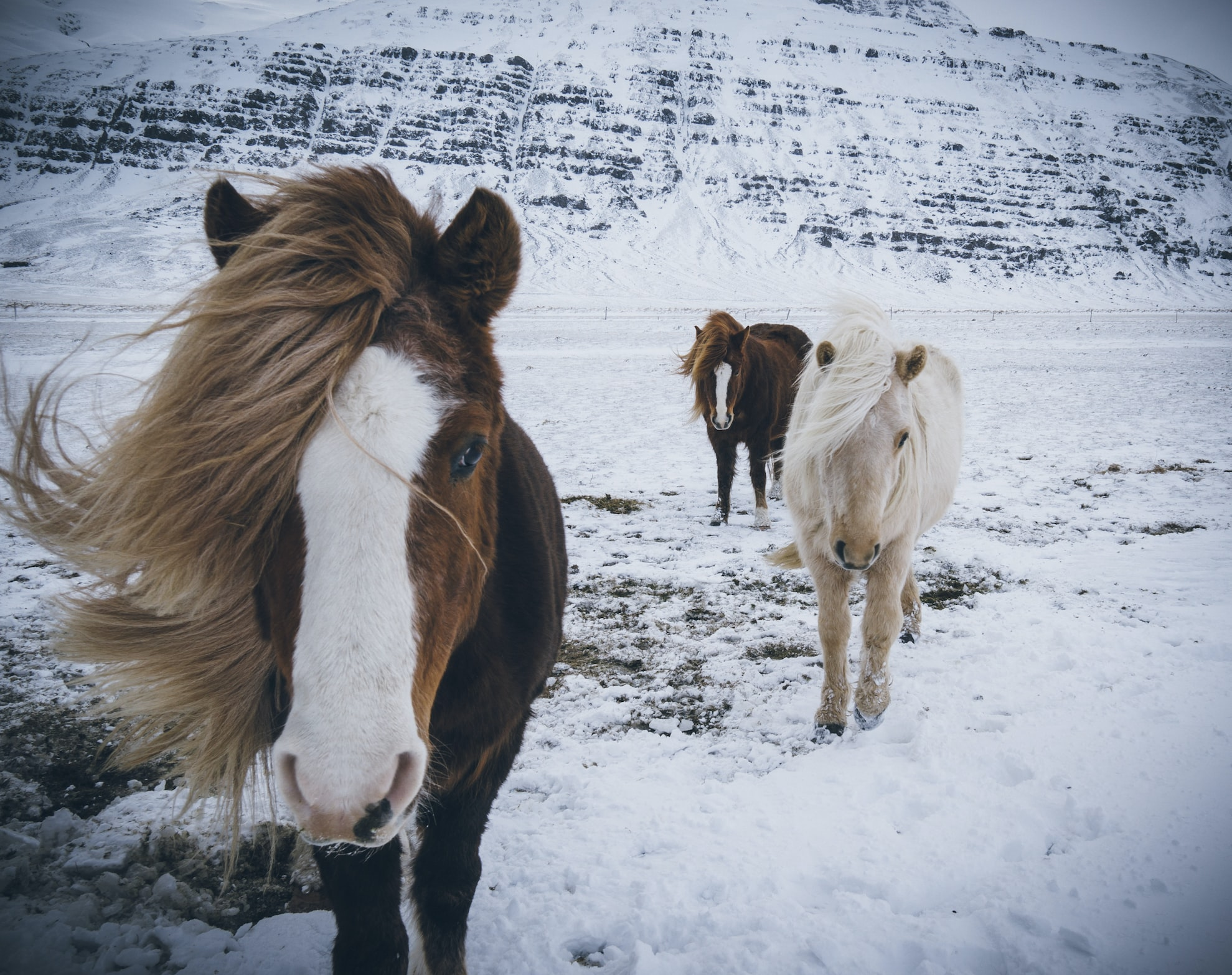 brown and white horses on snow-covered land
