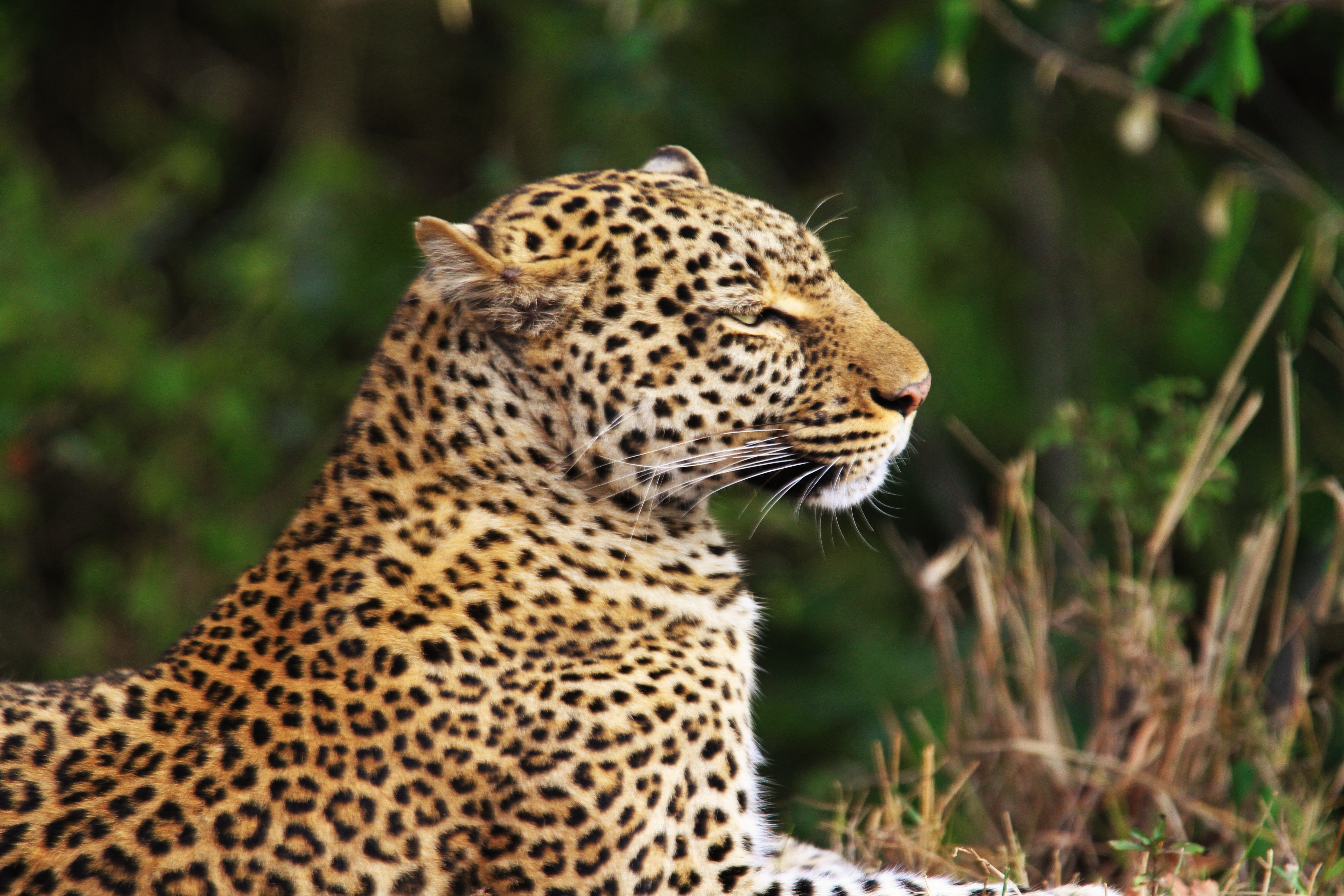 shallow focus photography of leopard