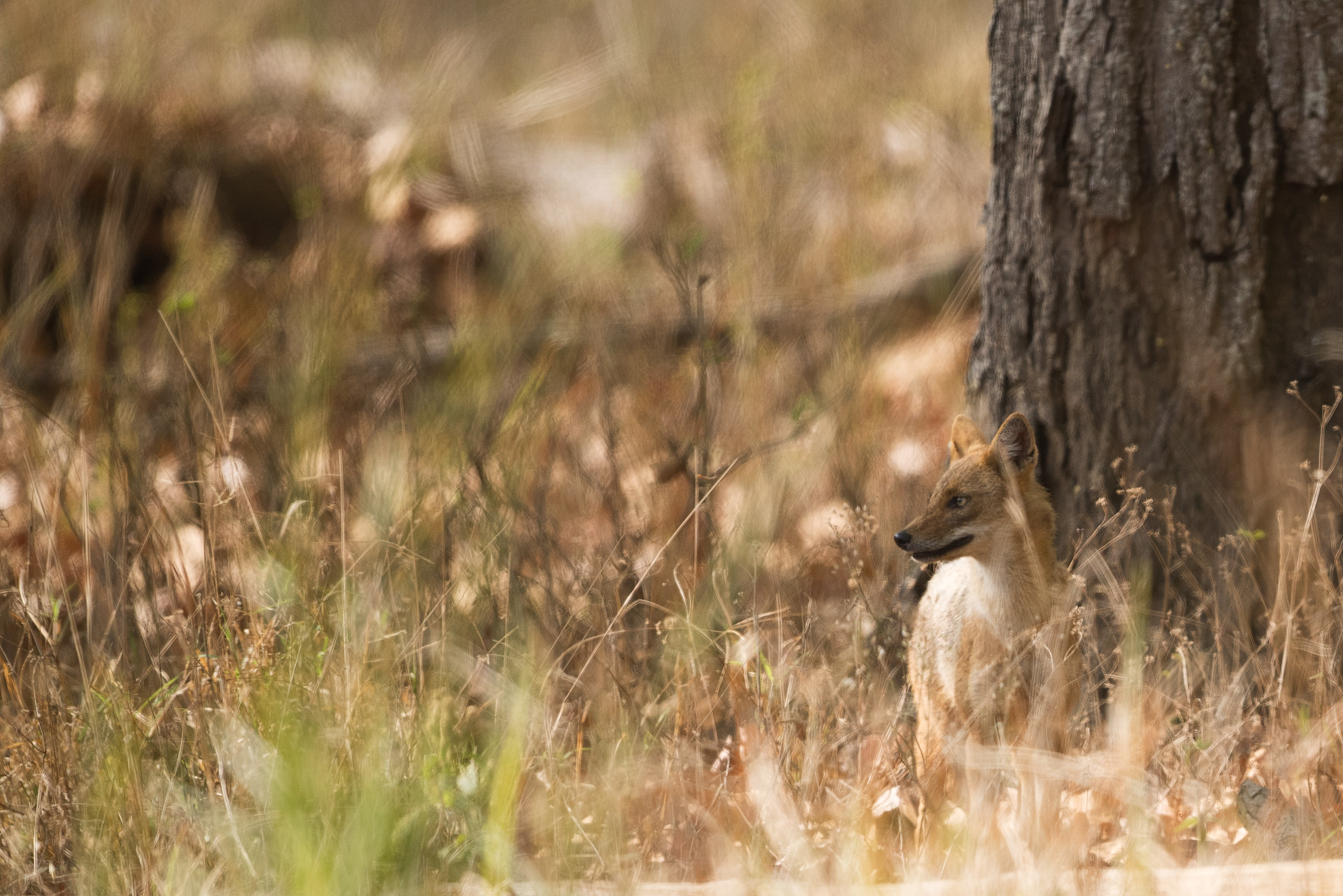 close-up photography of fox standing beside brown tree trunk