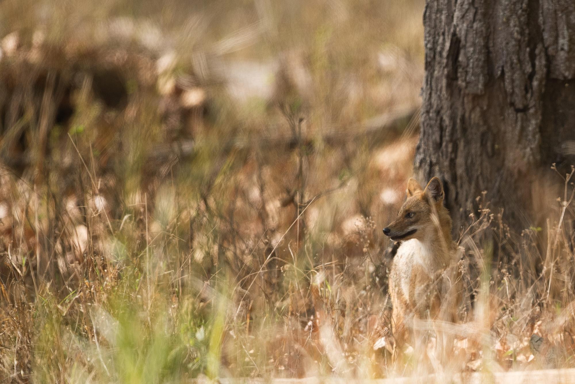 Çakala Benzer Vahşi Bir Hayvan Bulmaca Anlamı Nedir?