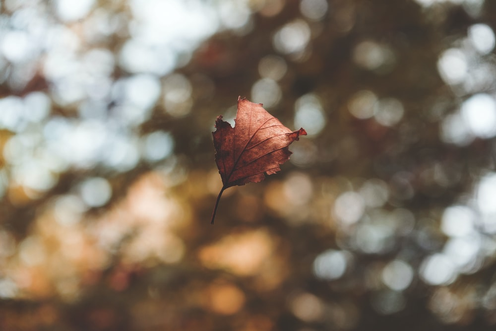 focus photography of dried leaf on midair