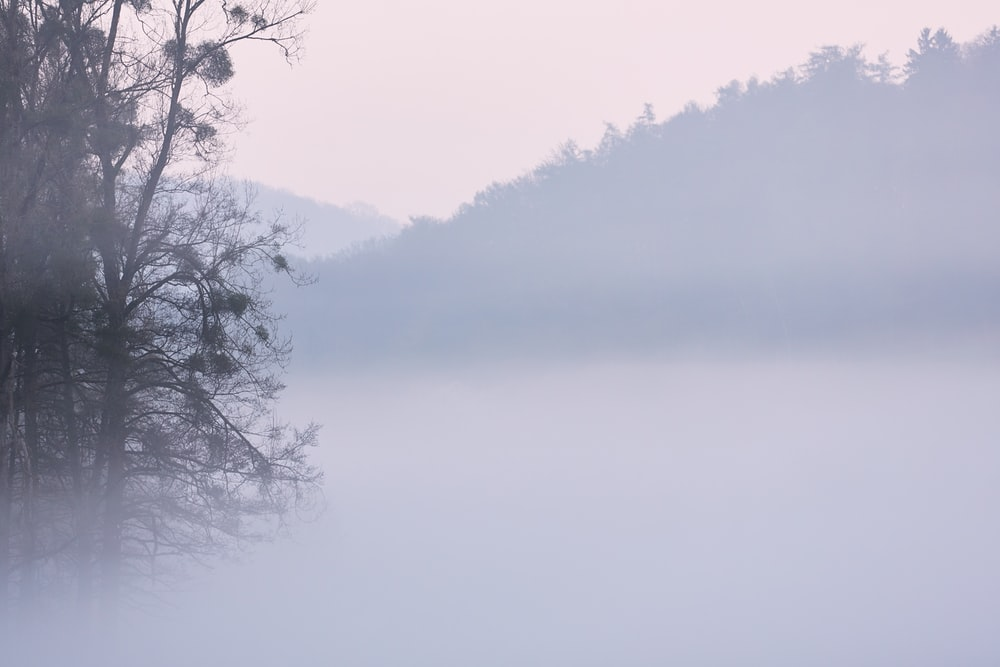 green leaf trees surrounded by fogs