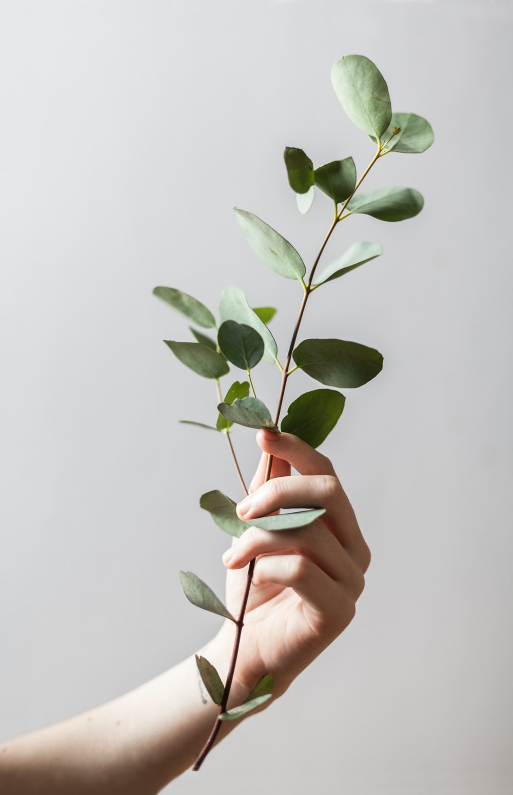 person holding leaf plant