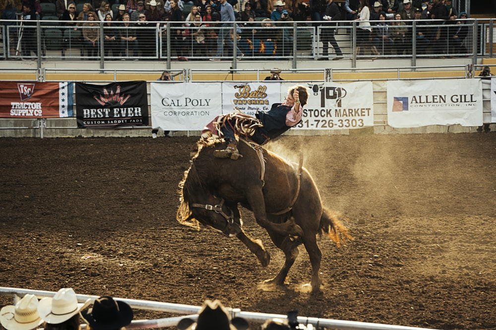 rodeo game in action