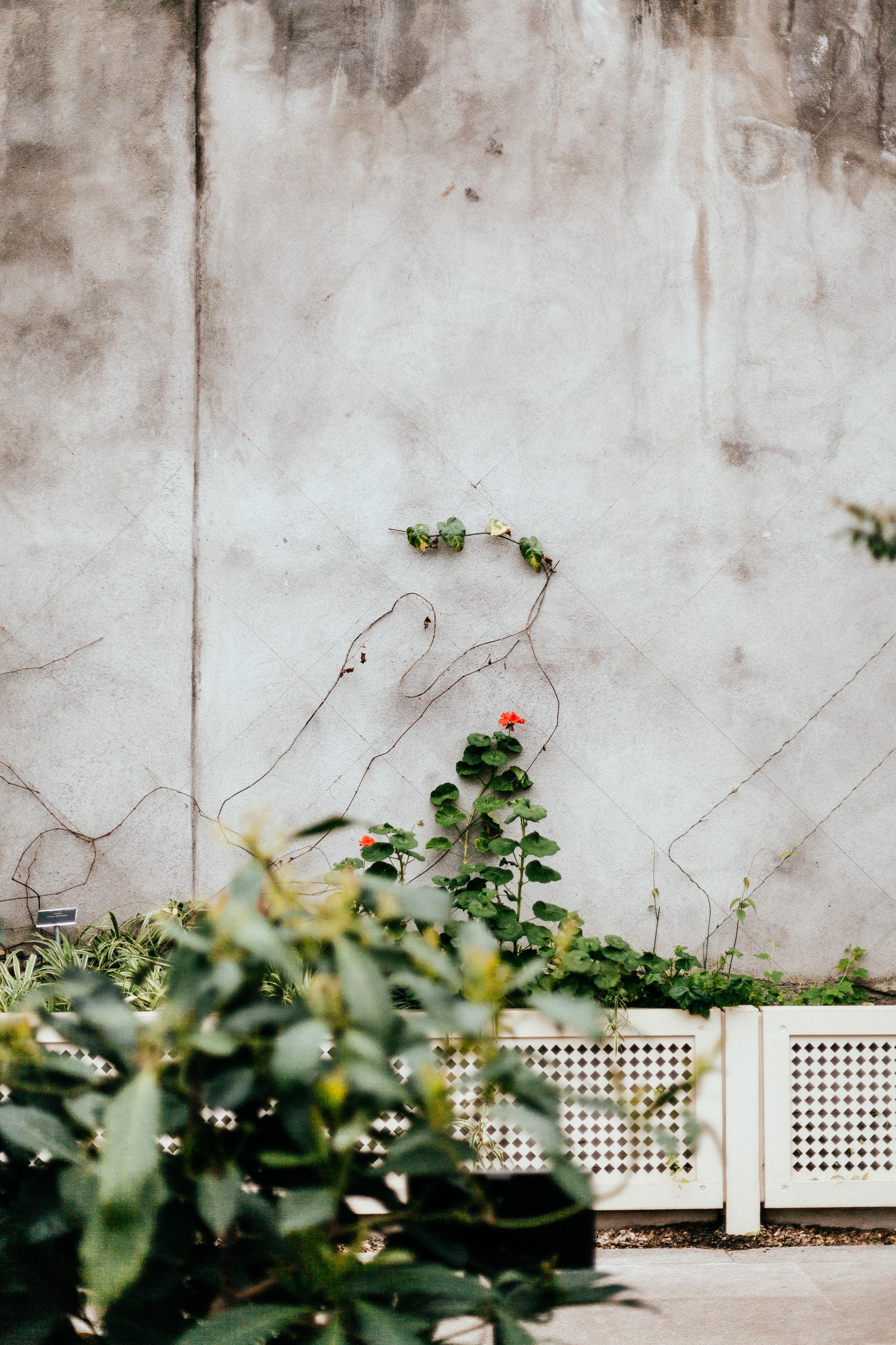 green vine plant on white concrete wall
