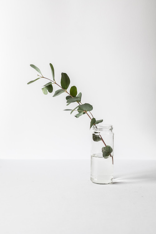 green leafed plant in glass jar