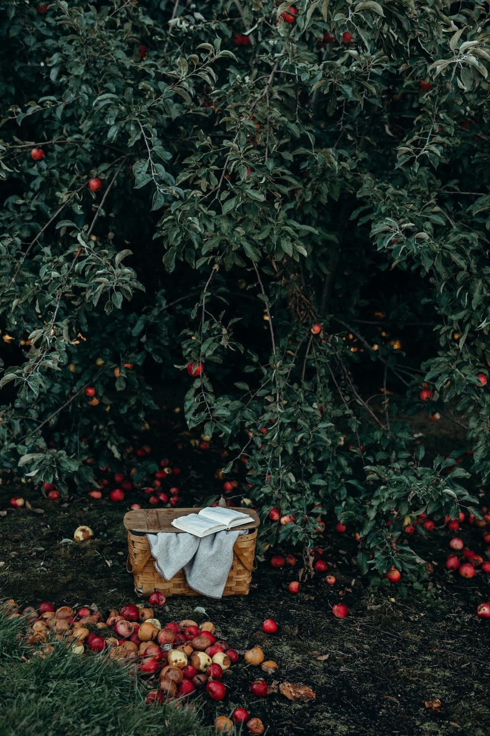 photo of basket near fruits and tree