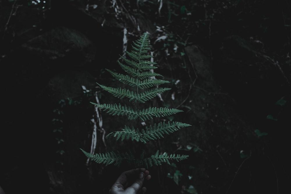person holding green fern branch