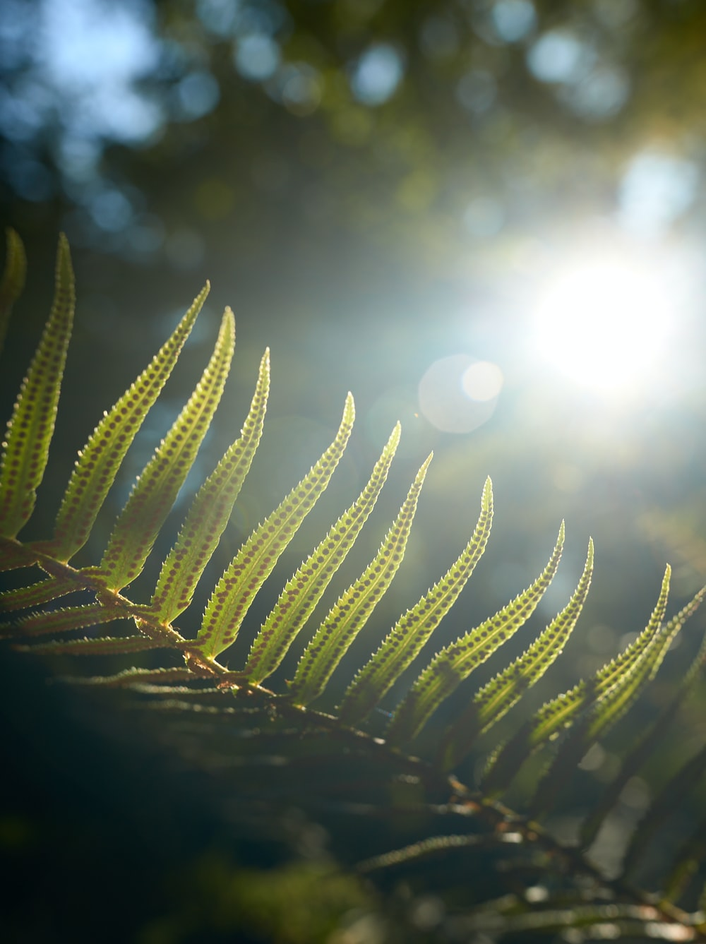 low angle of green fern plant
