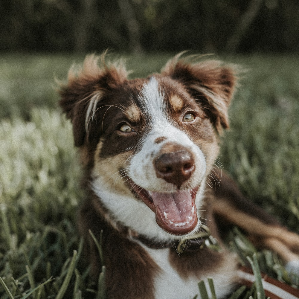 shallow focus photography of brown and white dog