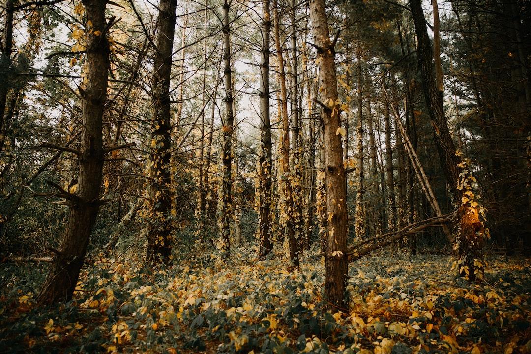 Forest Park Firelane 5