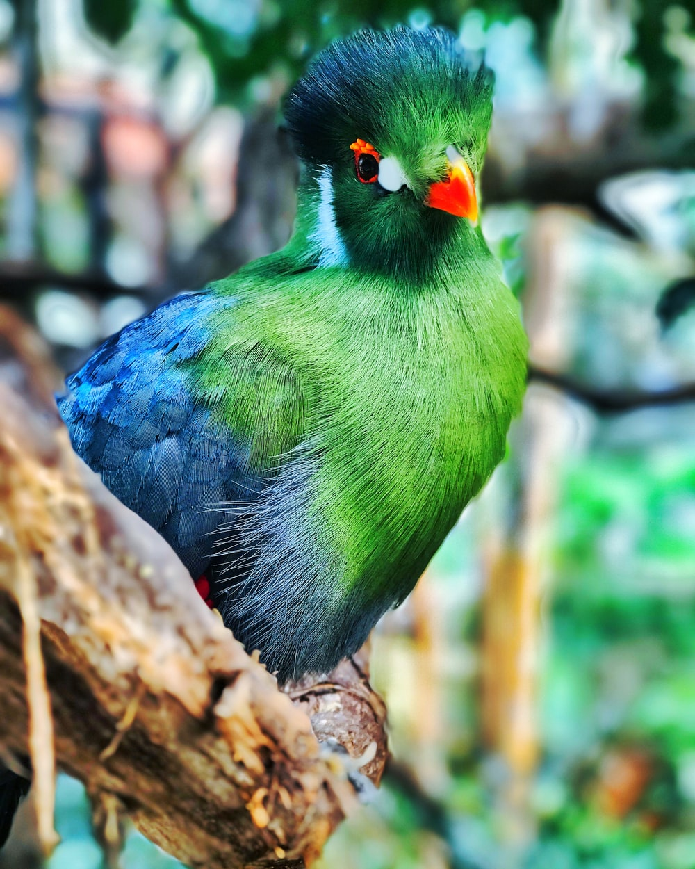 selective focus photography of green bird perched on brown tree branch