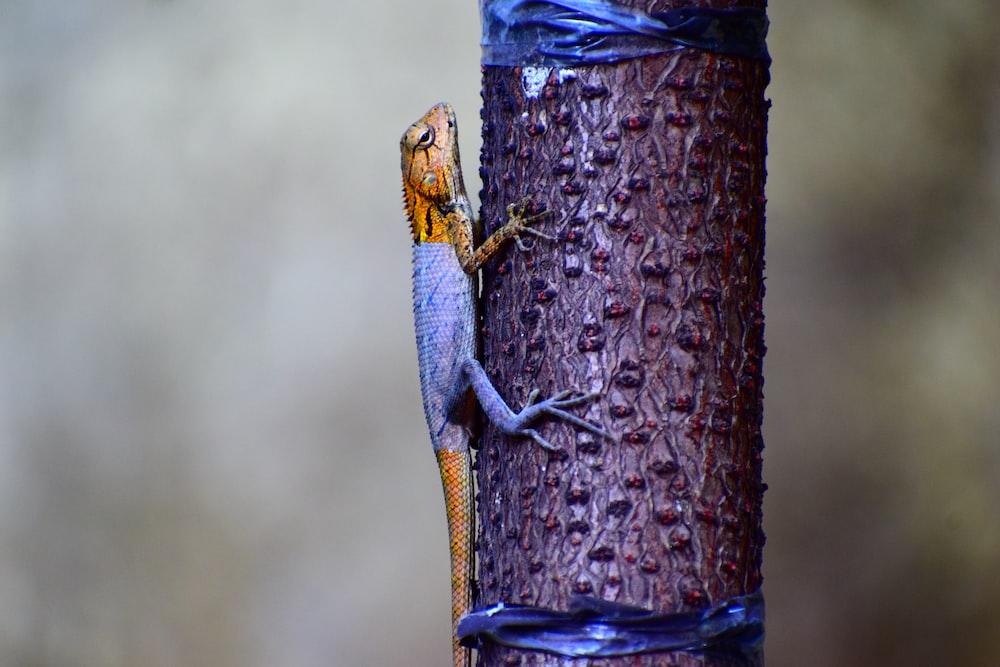 gray and brown lizard climbing on purple tree trunk