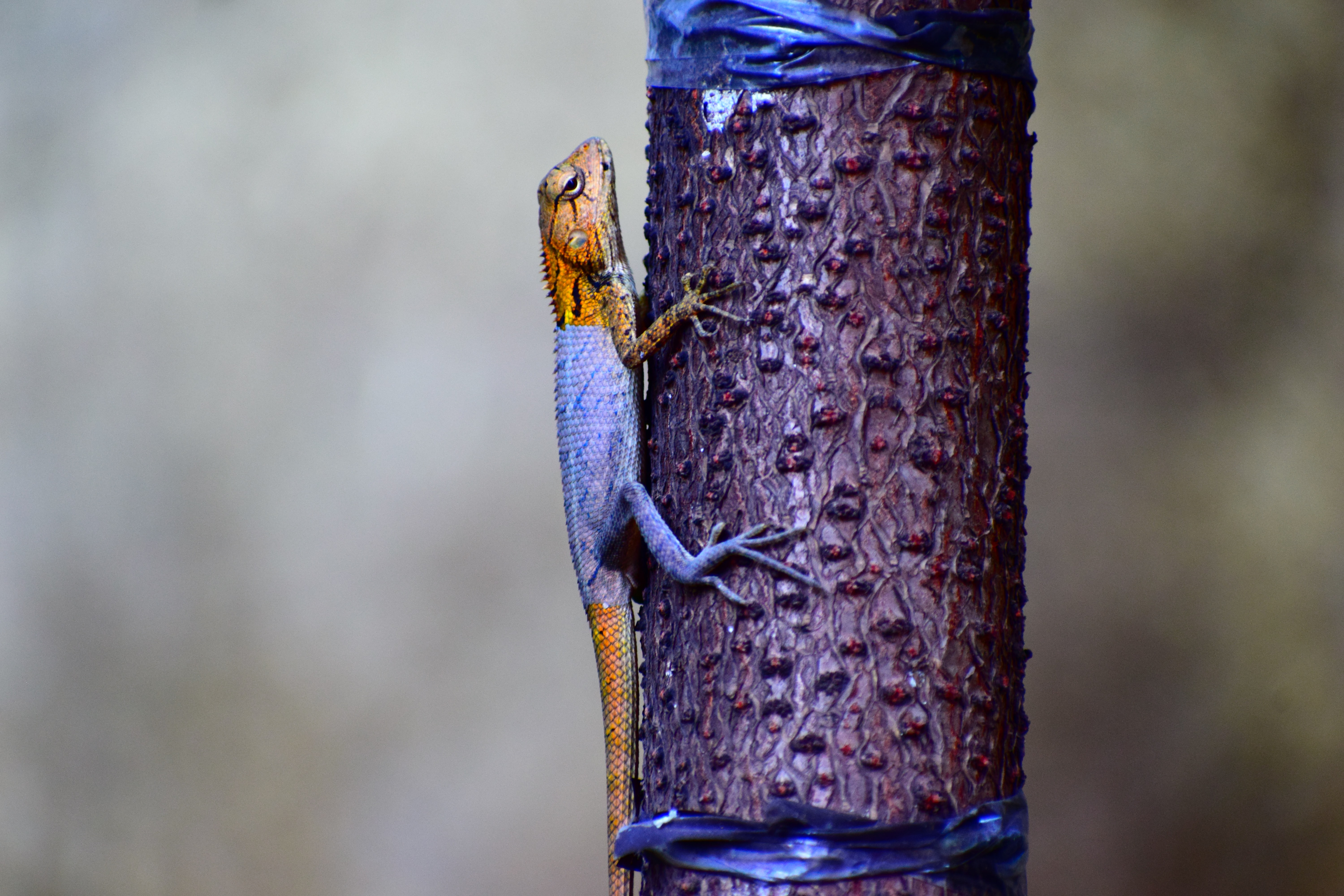 gray and brown lizard climbing on purple tree trunk