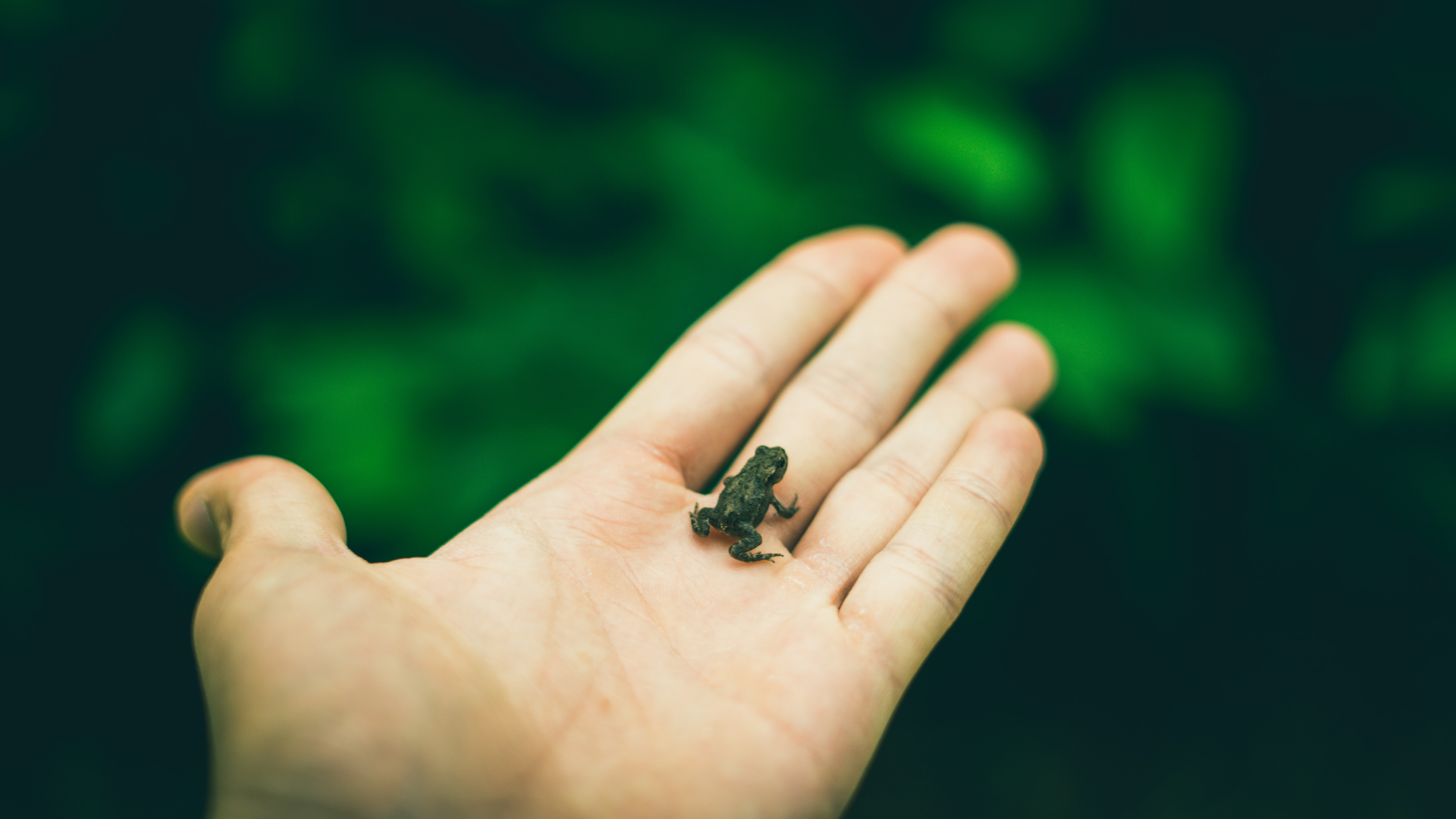 person holding black frog