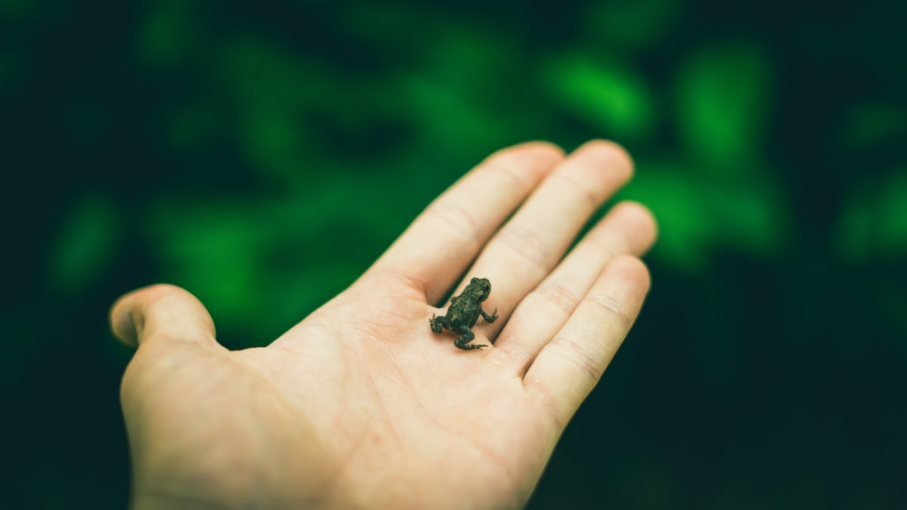 Best 500+ Baby Frog Pictures   Download Free Images on Unsplash