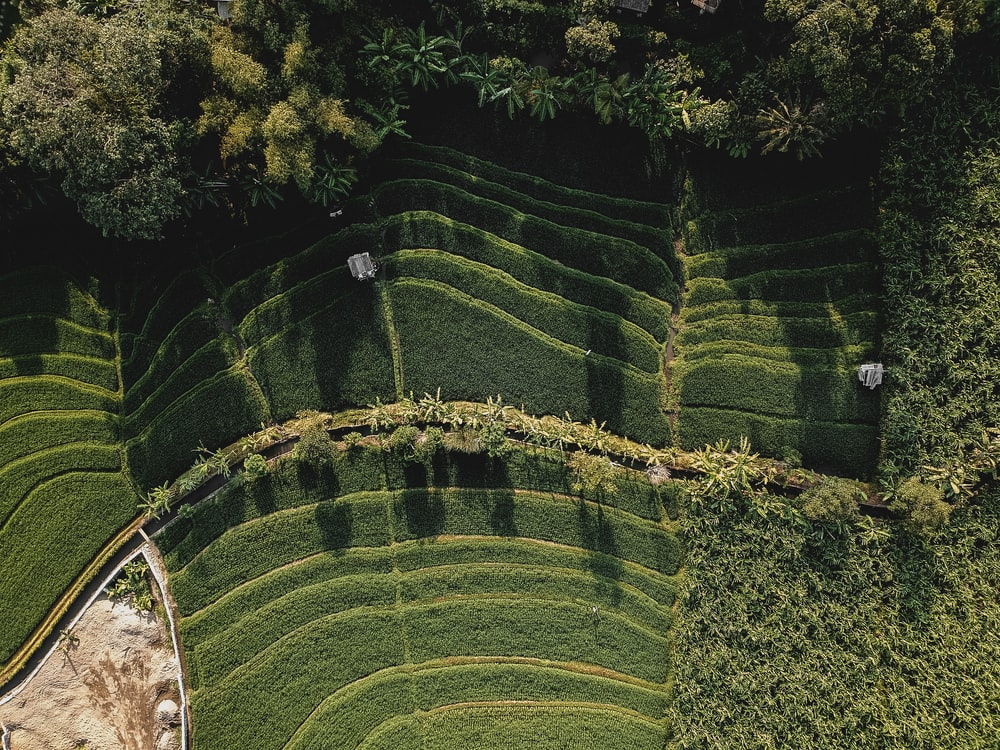 aerial photography of leafed plants