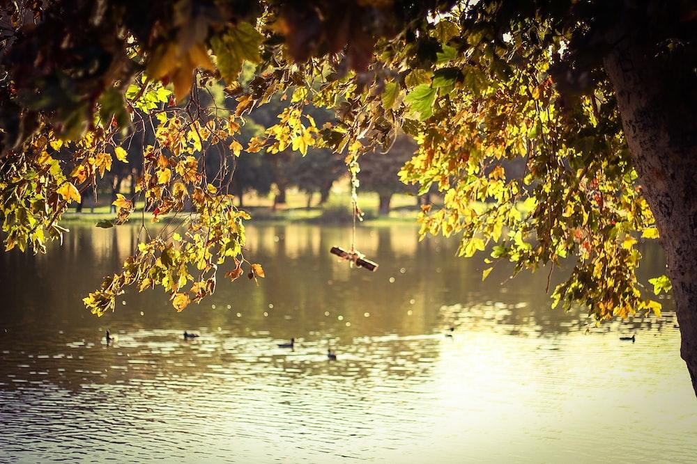 green tree beside body of water