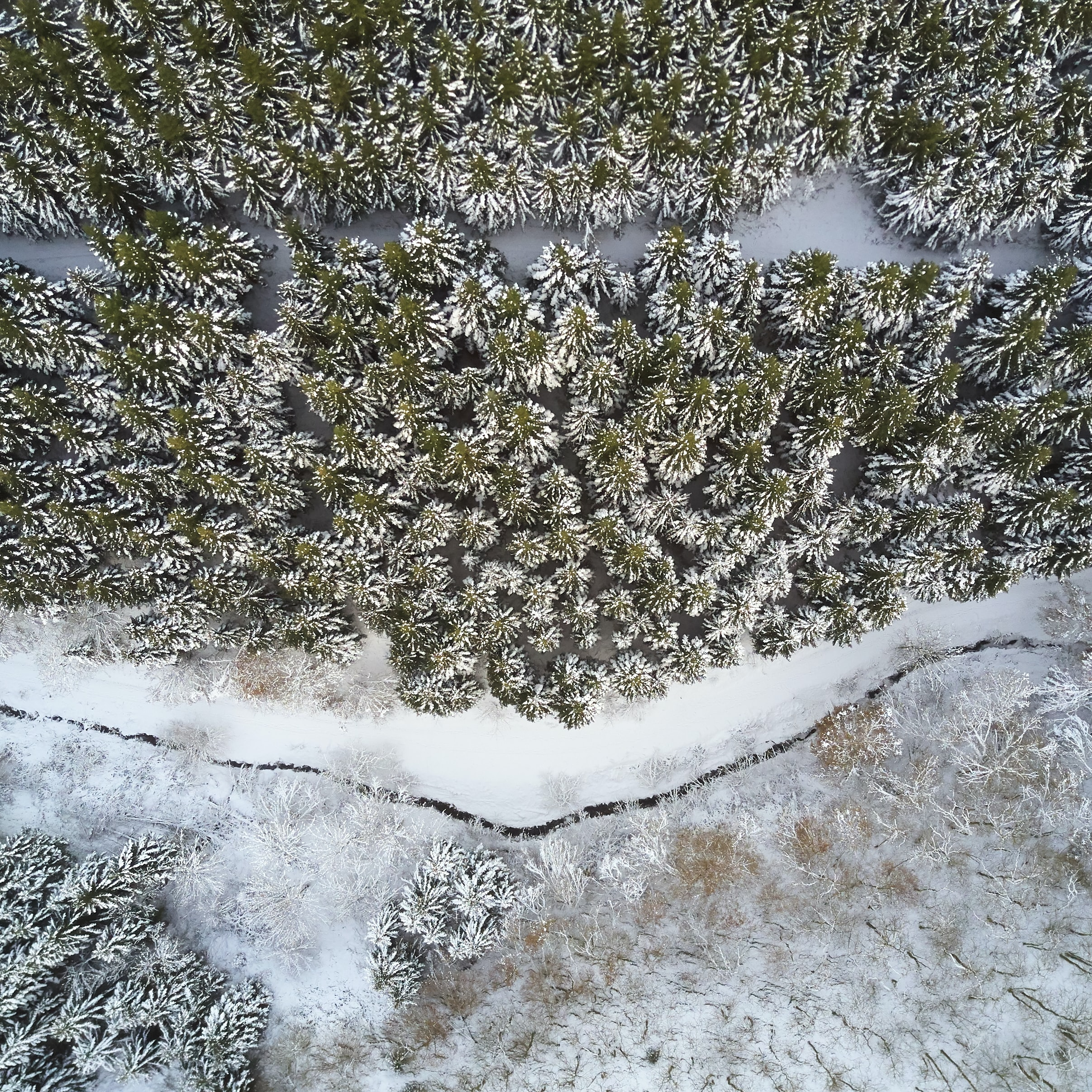 aerial view of land with pine trees covered by snow