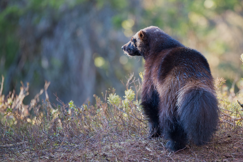 shallow focus photograph of black animal